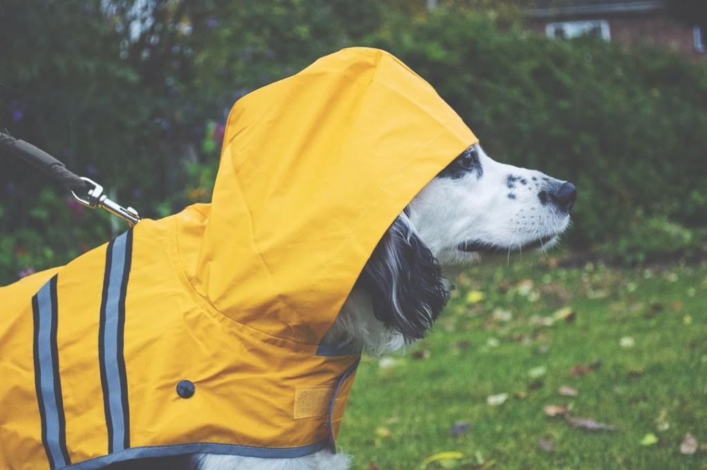 Waterproof Yellow Sunshine Dog Raincoat