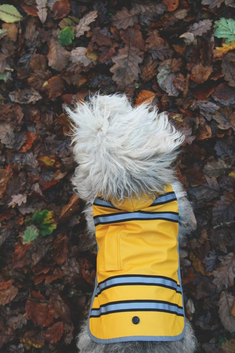 Waterproof Sunshine Dog Raincoat by Sotnos