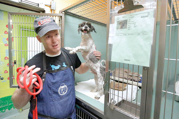 man grooms old shelter dogs for free