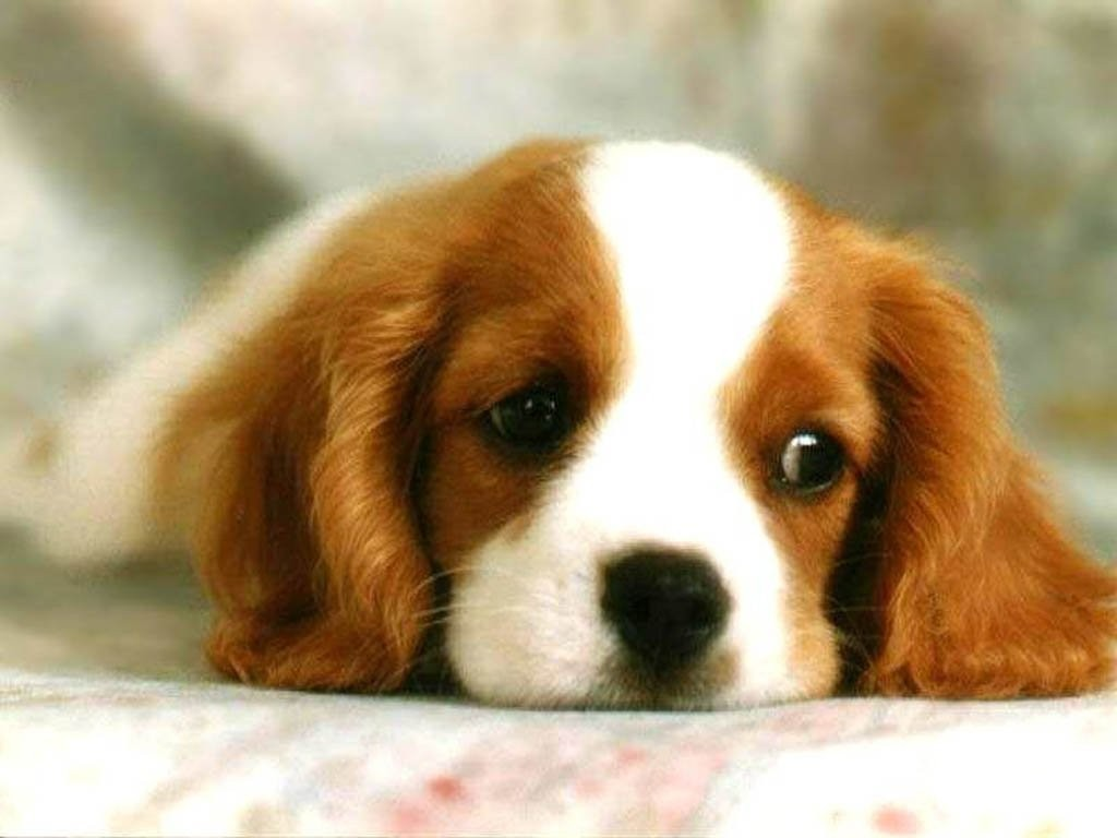 cute-dog-dogs