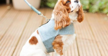 Mutts and Hounds Blue Tweed Dog Harness