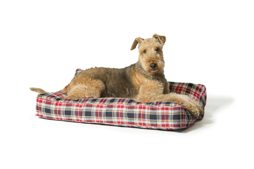 Lumberjack Dog Beds Red And Grey Box Duvet by Danish Design