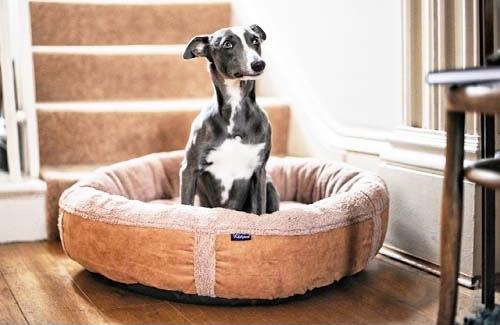 Personalised Caramel Fleece Donut Dog Bed
