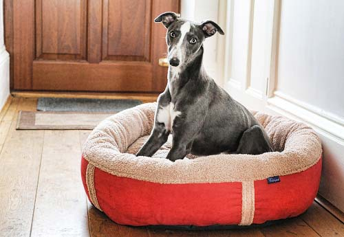 Personalised Donut Dog Bed Red