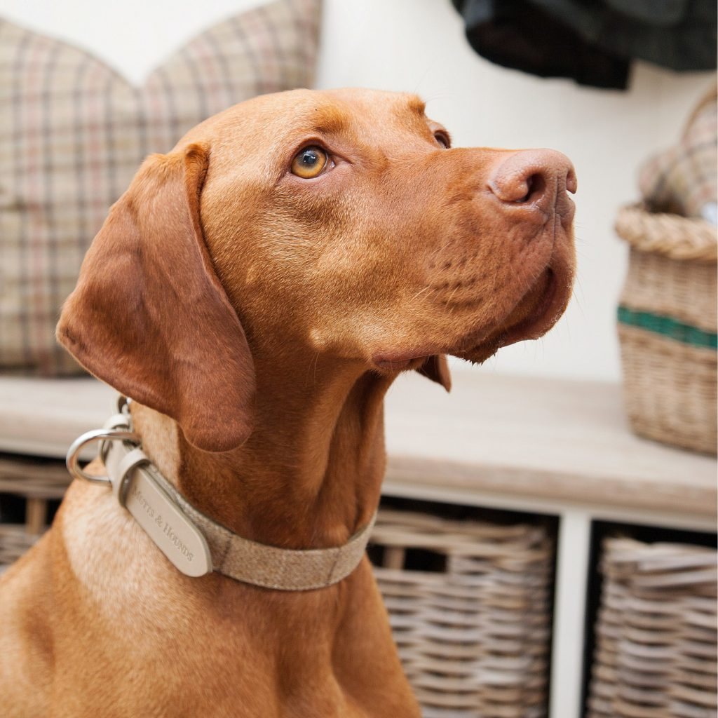 tweed and leather dog collar for vizsla