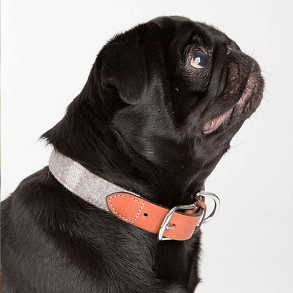 Tweed and Leather Pug Collar