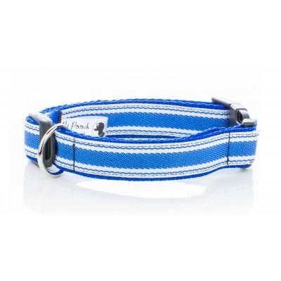 blue collar for vizsla