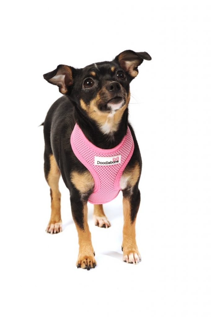 padded pink dog harness