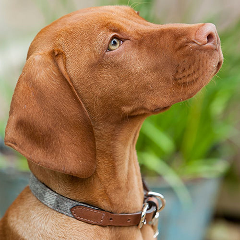 Best Dog Collar For Dogs