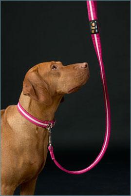 soft dog collars uk