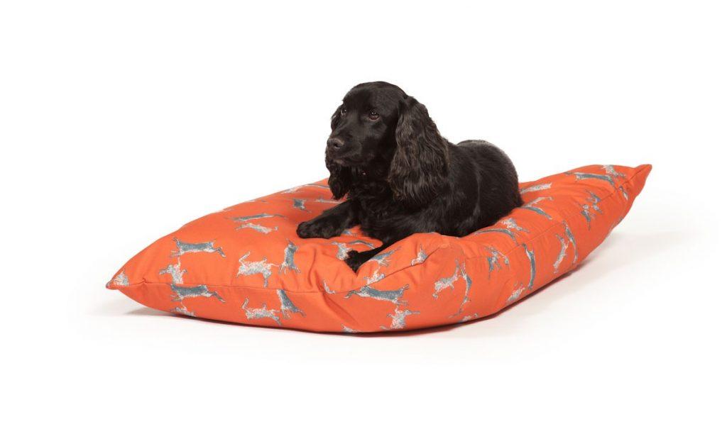 bright orange funky dog bed