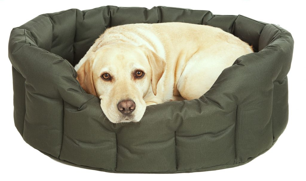green waterproof high sided dog bed