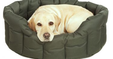 Waterproof dog beds at Chelsea Dogs