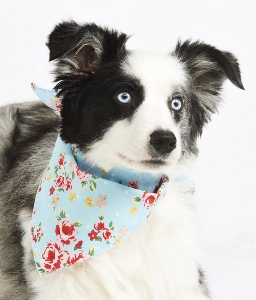 Blue flowers dog bandana