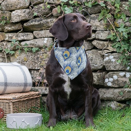 mutts_and_hounds_peacock_dog_bandana_2_2