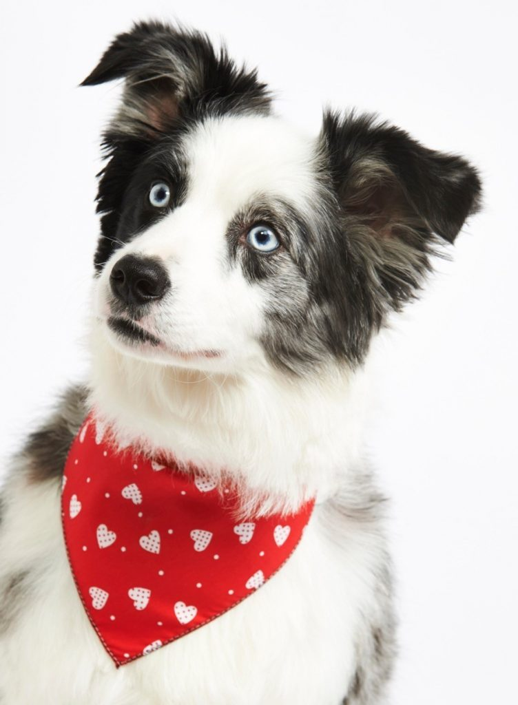 Bandanas For Small Dogs Uk