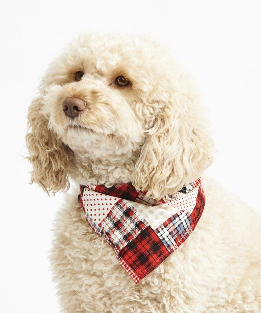 designer dog bandana red