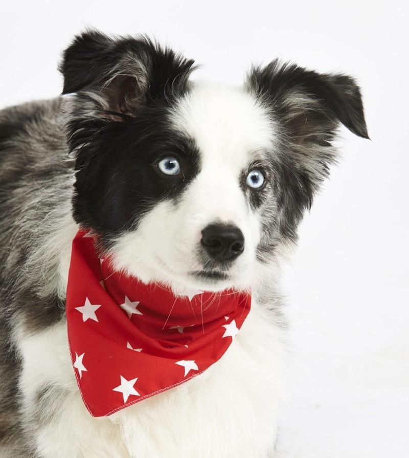 red star dog bandana pet pooch