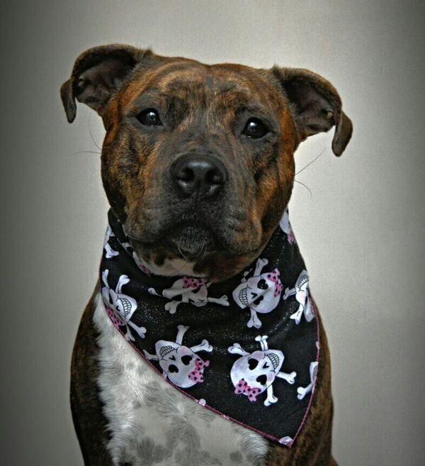 skulls dog bandana