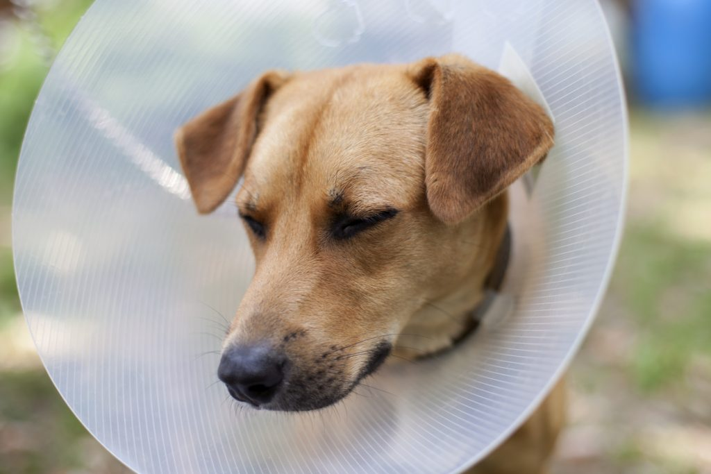 cons neutering your dog