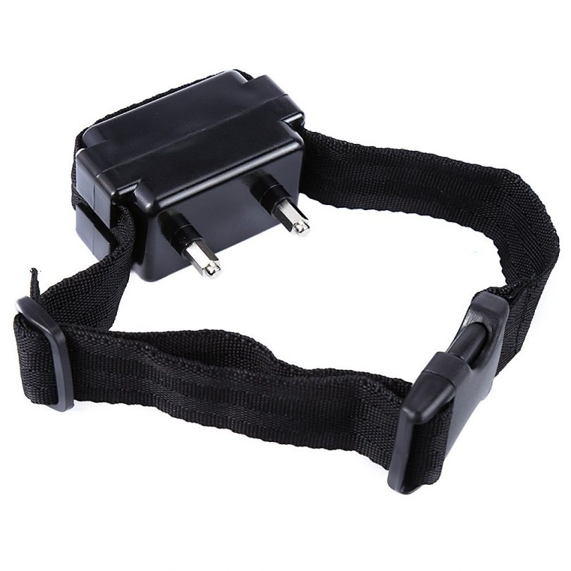 UK Ban Electric Dog Collars