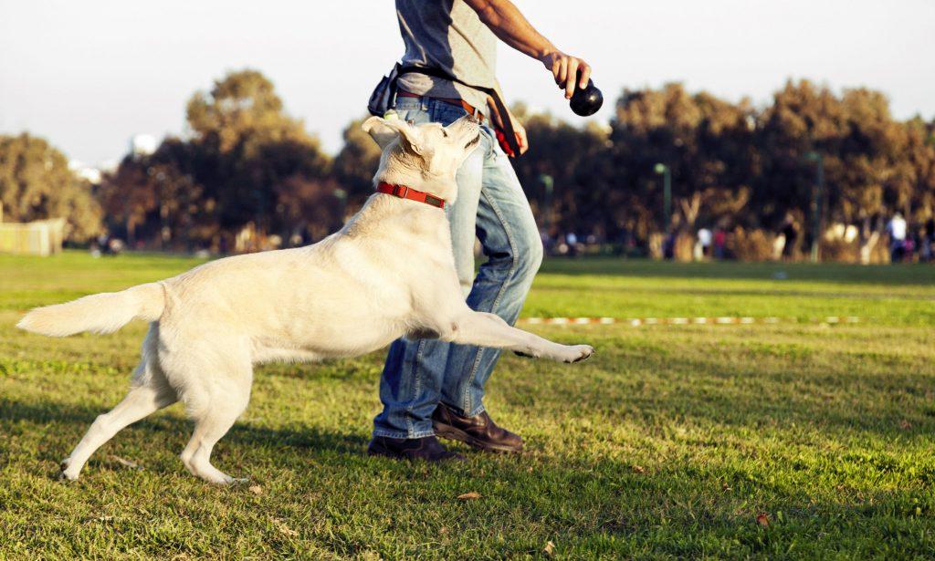 Dog Breeder Playing