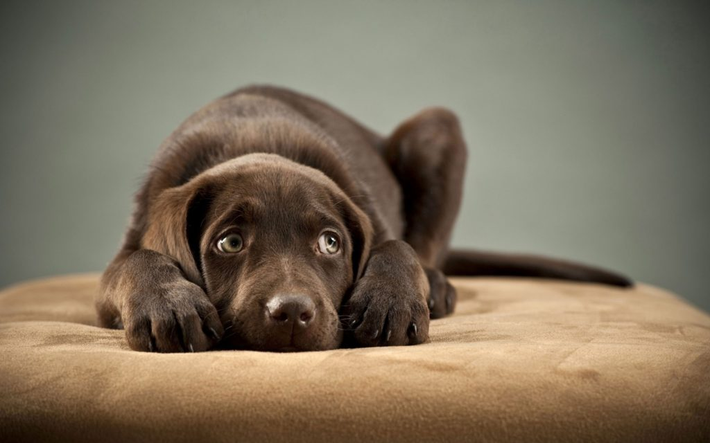 chocolate is poisonous to dogs easter