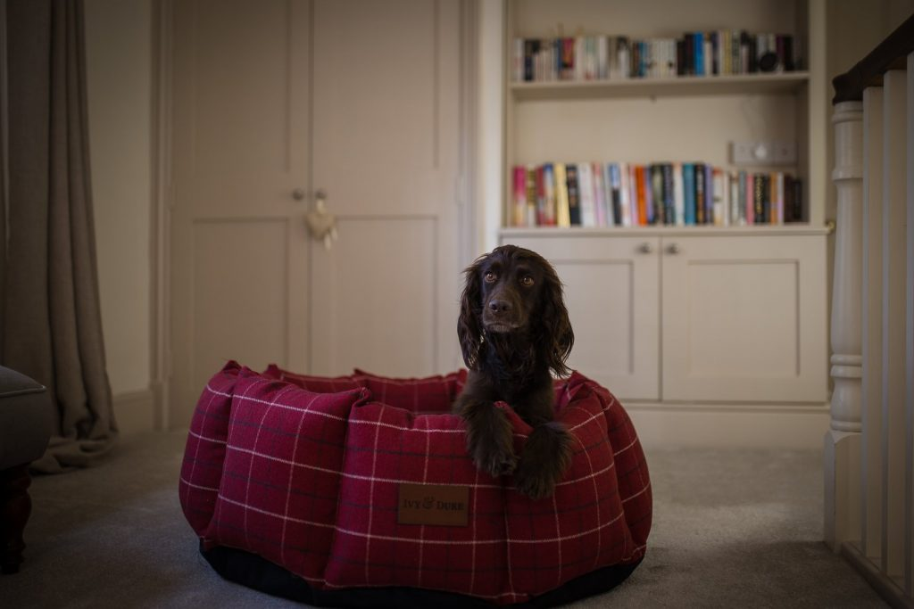 5 Best Dog Beds In The Uk