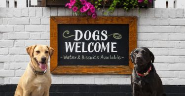 Dog Friendly Pubs in Chelsea