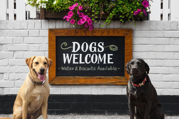 dog friendly places to eat