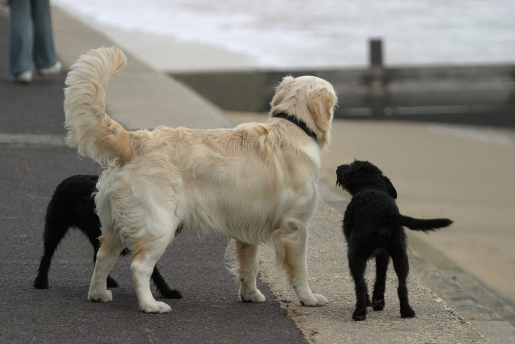 Dogs wagging their tails means different thing