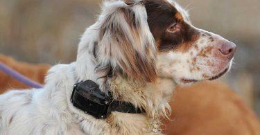 uk ban electric dog shock collars