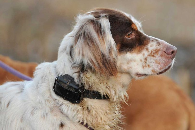 Are Electric Collars For Dogs Cruel