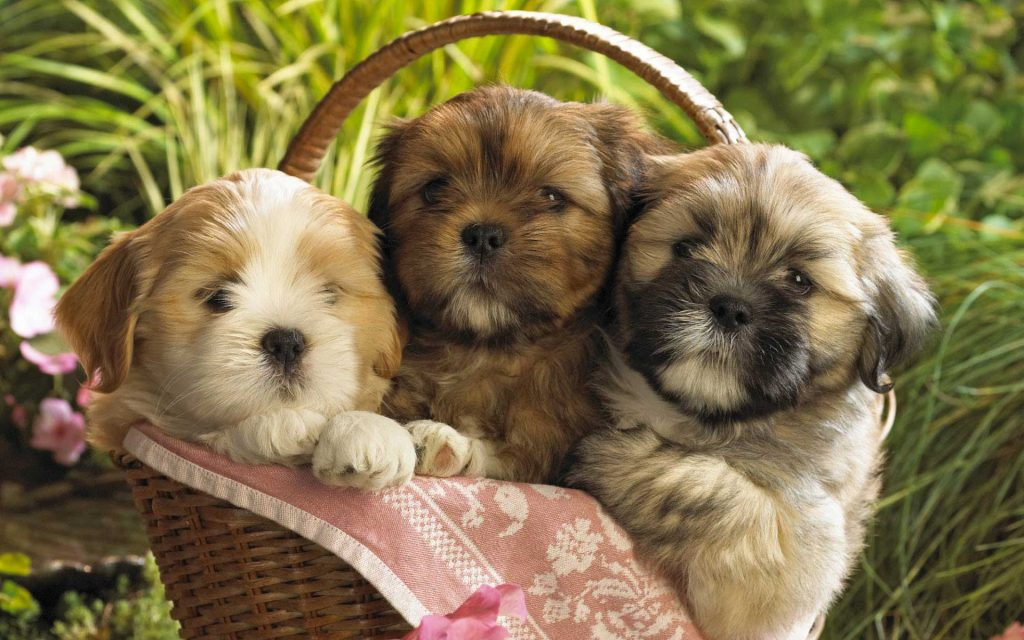 Cute puppies from breeders