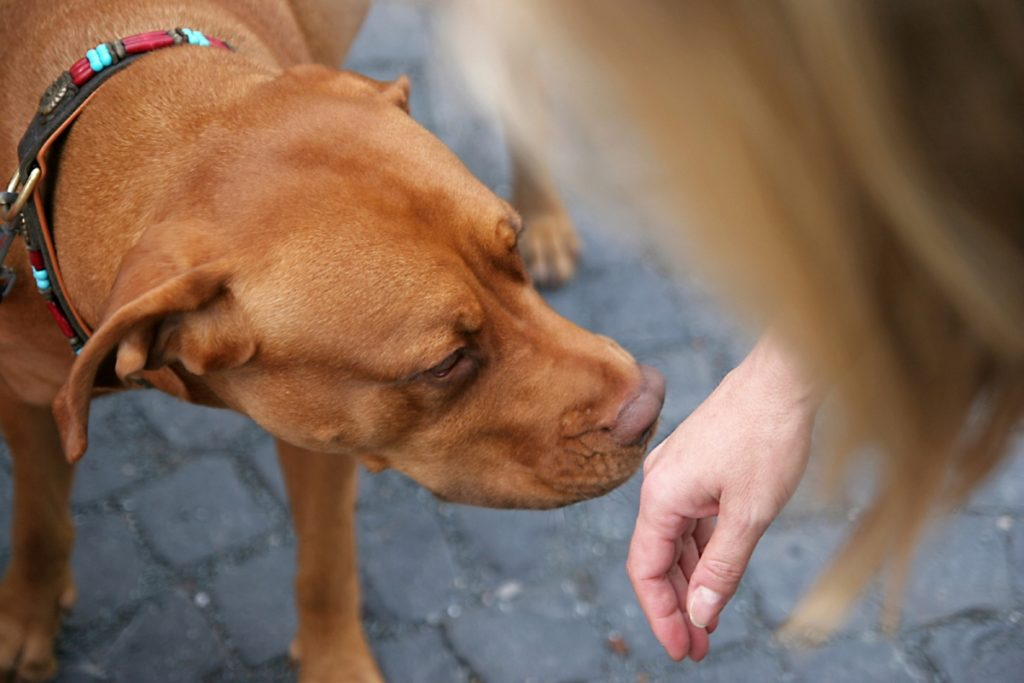 Dogs smelling diseases