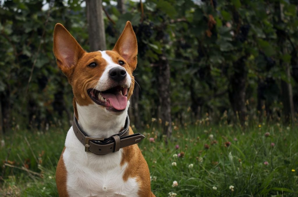Dogs have extra sensitive ears