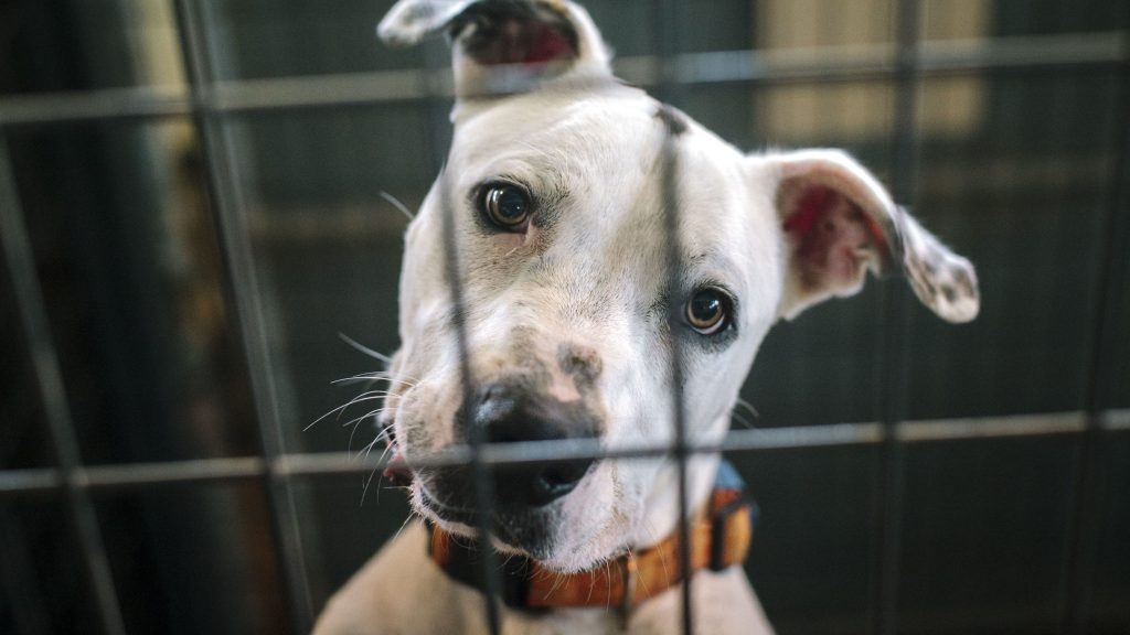 Adopting dogs from shelters