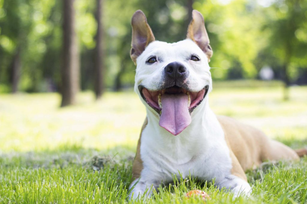 neutering your dog pros
