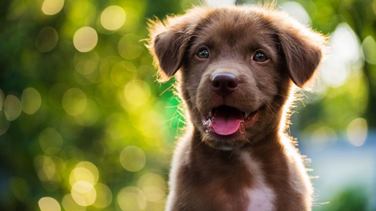 health pros of neutering your dog