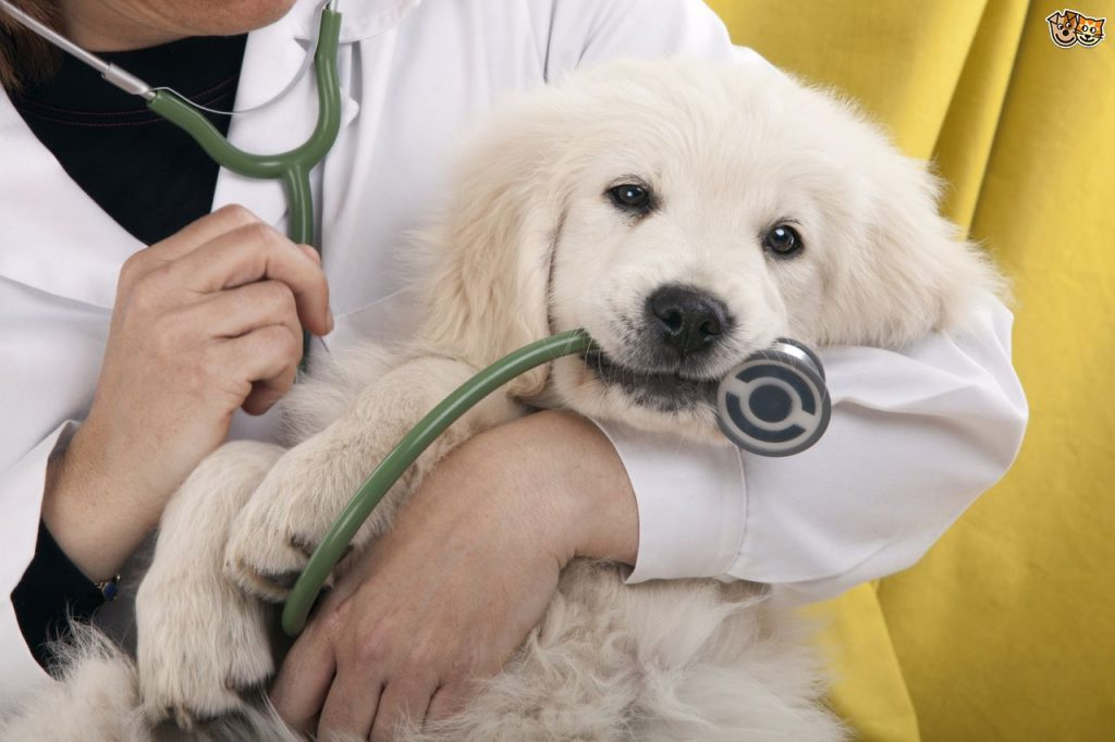 treatment and prevention lungworm in dogs