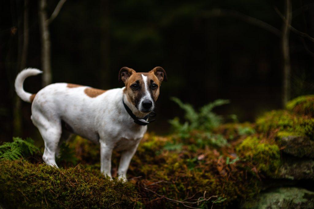 dog training shock collars