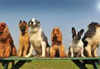 15 facts you didn't know about your dogs