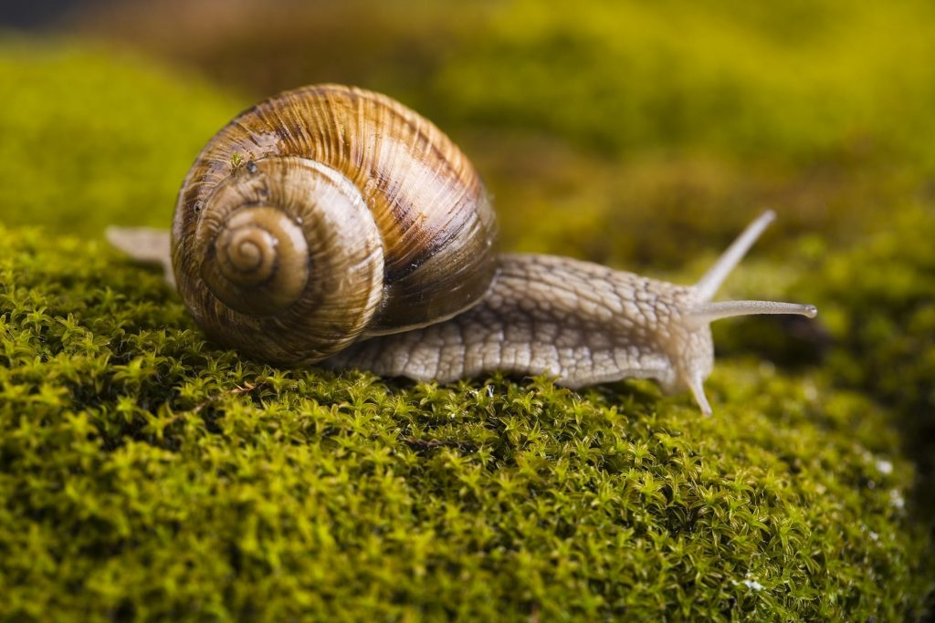 snails lungworm in dogs