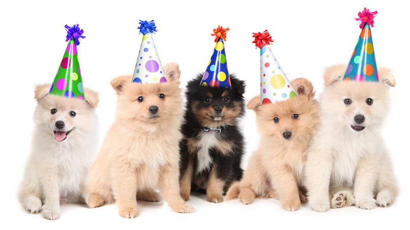 Adorable Birthday Gifts For Dogs