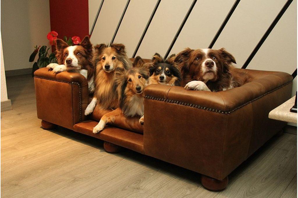 Sandringham Chesterfield dog beds uk