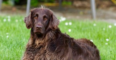 spaying your dog benefits