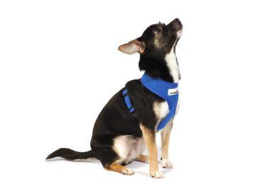 padded dog harnesses