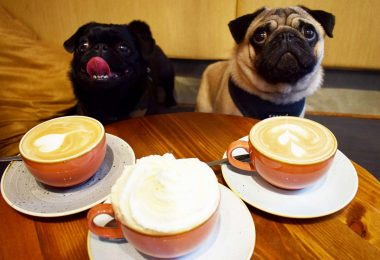 dog cafes in london pug cafe