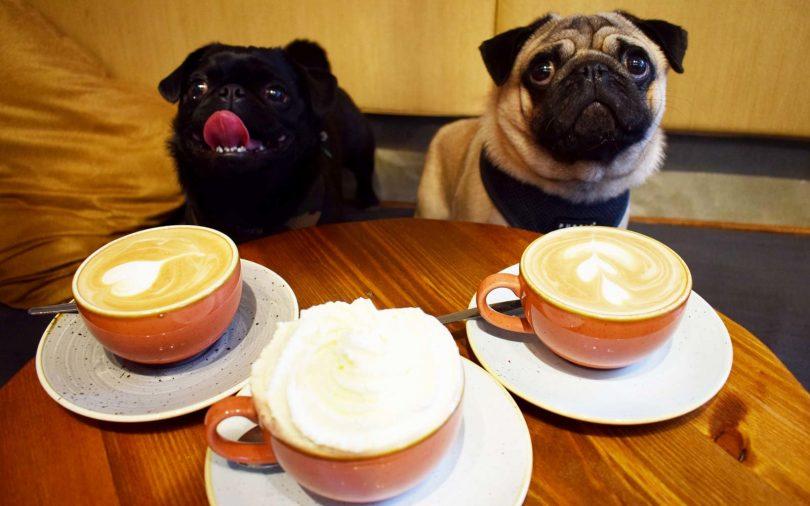 dog cafes in london pug cafe
