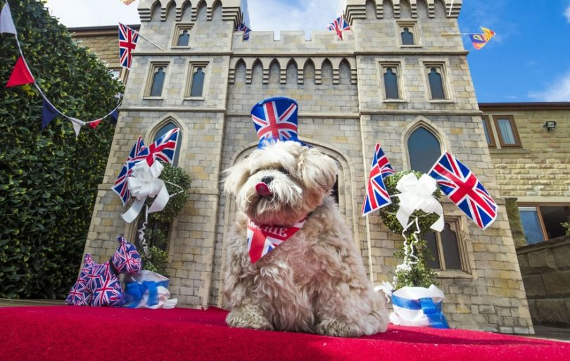 union jack dog accessories